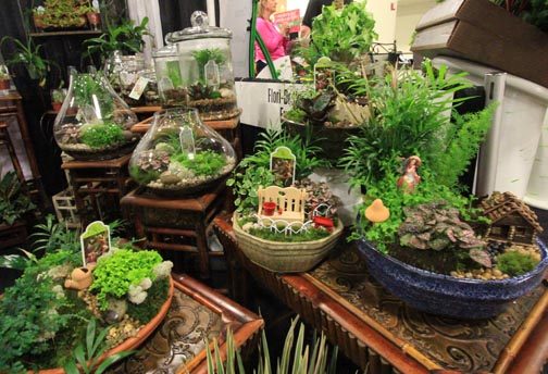 Article comments for Dish garden designs